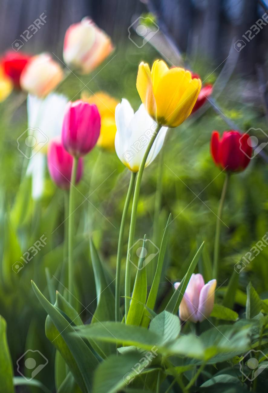 Spring flowers grow in the meadow by day stock photo picture and spring flowers grow in the meadow by day stock photo 73394002 mightylinksfo