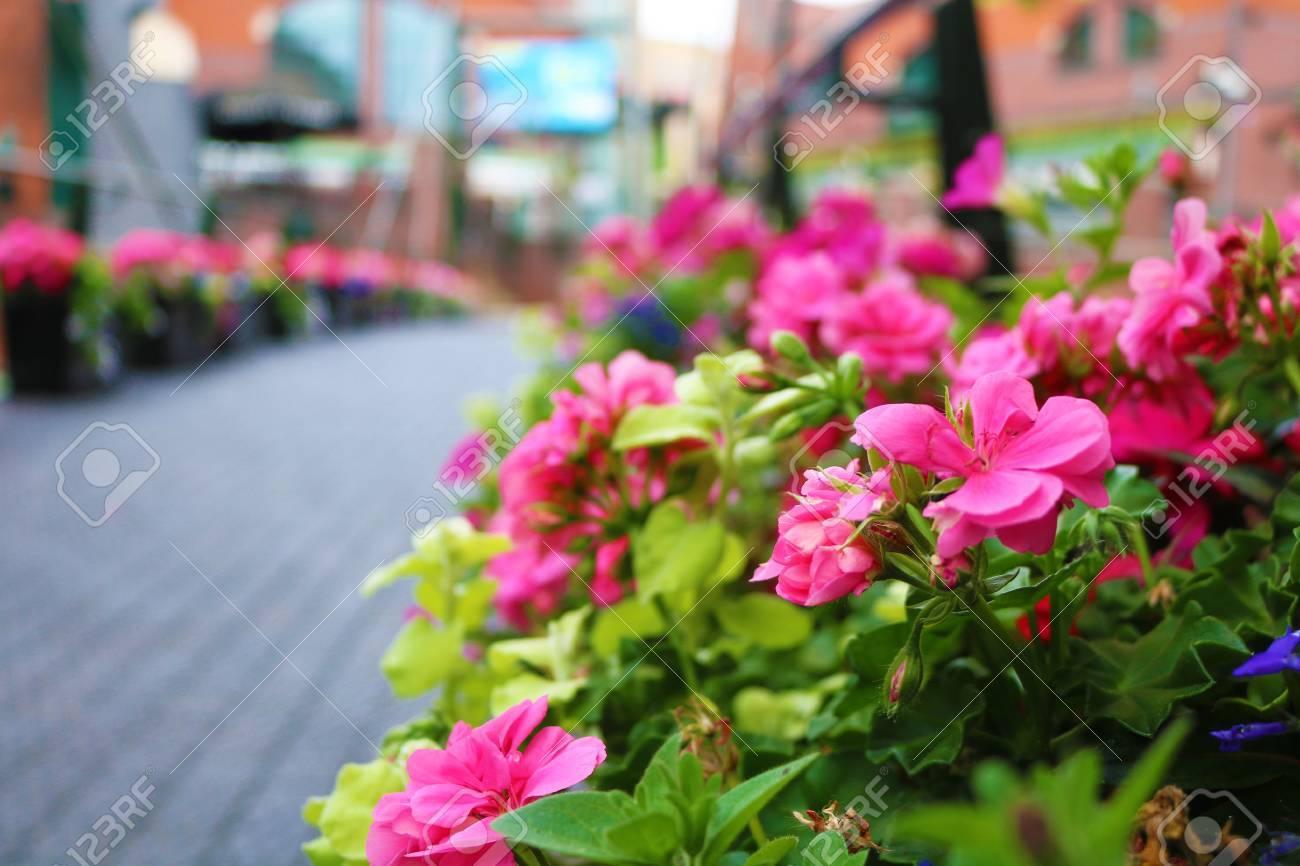 Birmingham Flowers on pathway broad street Stock Photo - 82329448