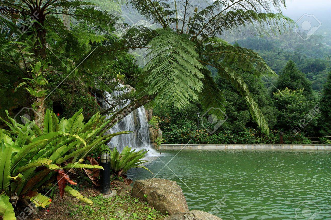 garden with tropical plants, having a waterfall through decorative