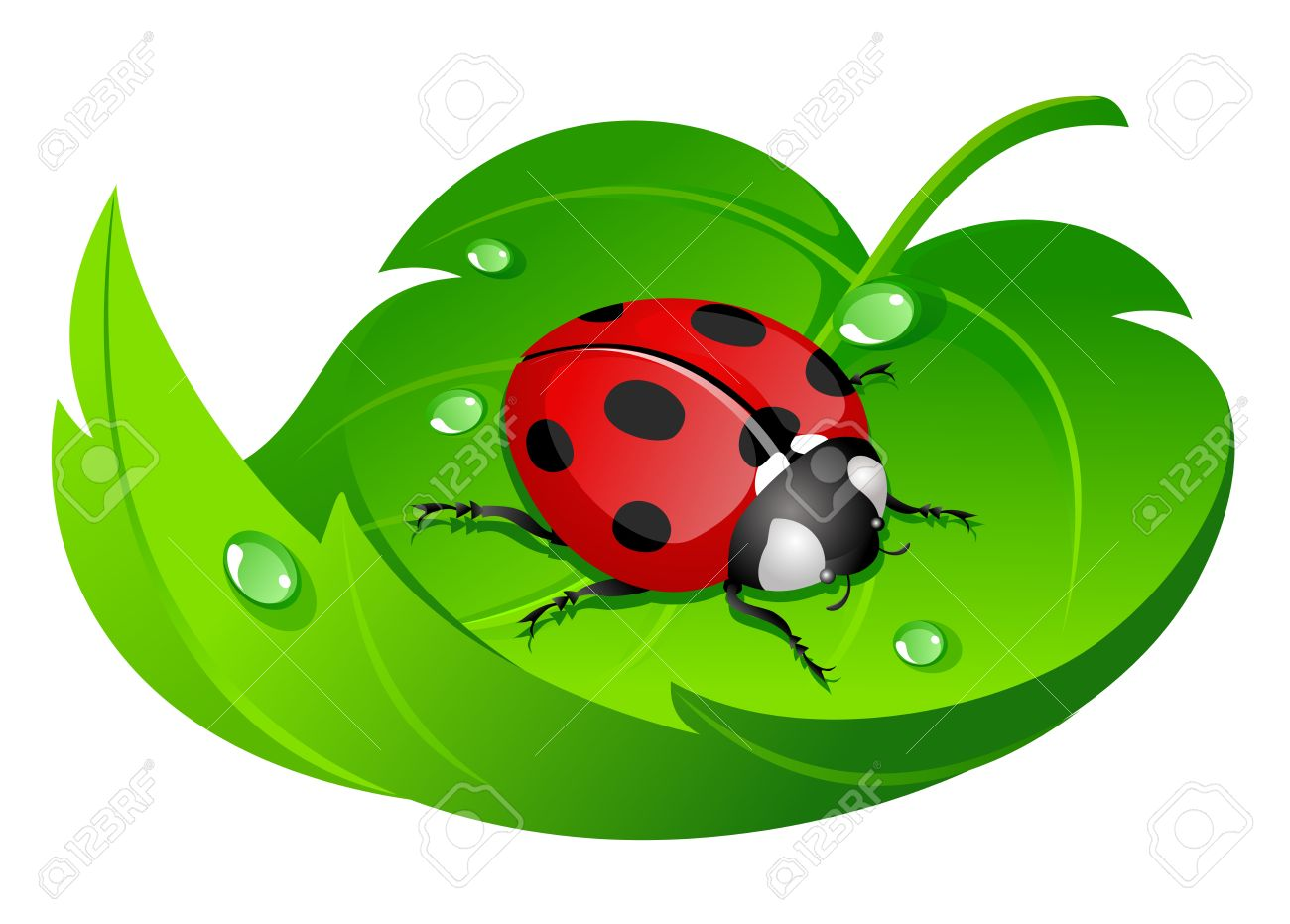 ladybug on leaf Stock Vector - 3216749
