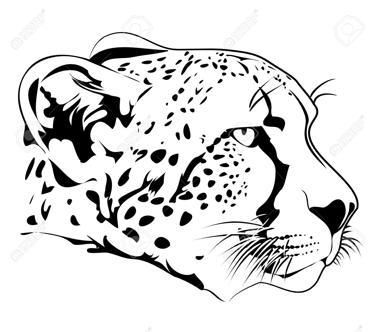 cheetah head royalty free cliparts vectors and stock
