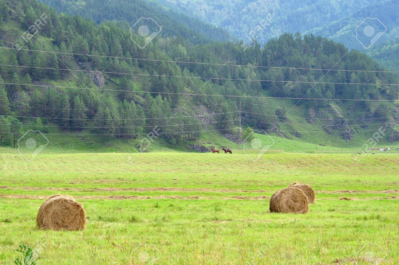Hay In Rolls On A Field Among Mountains