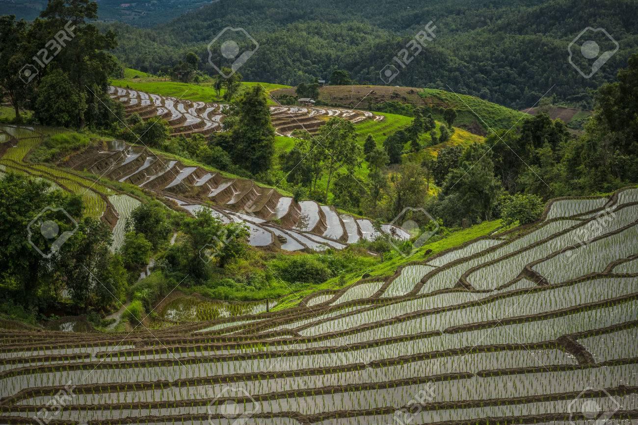 Terrazas De Arroz Campo De Arroz En La Montaña Retiros Naturales La Vida De La Tribu De La Colina
