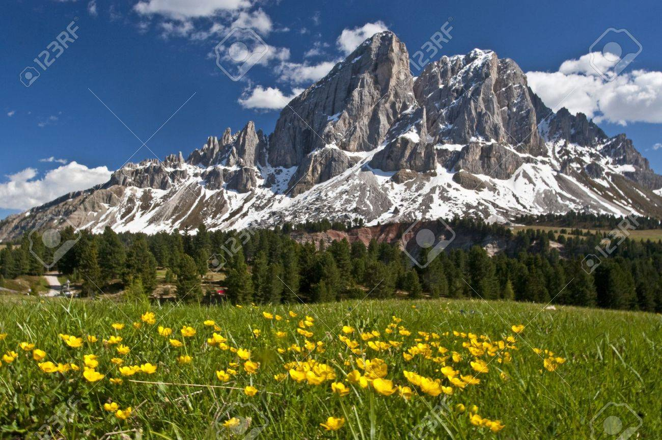 Peitlerkofel and flower meadow - 11700372