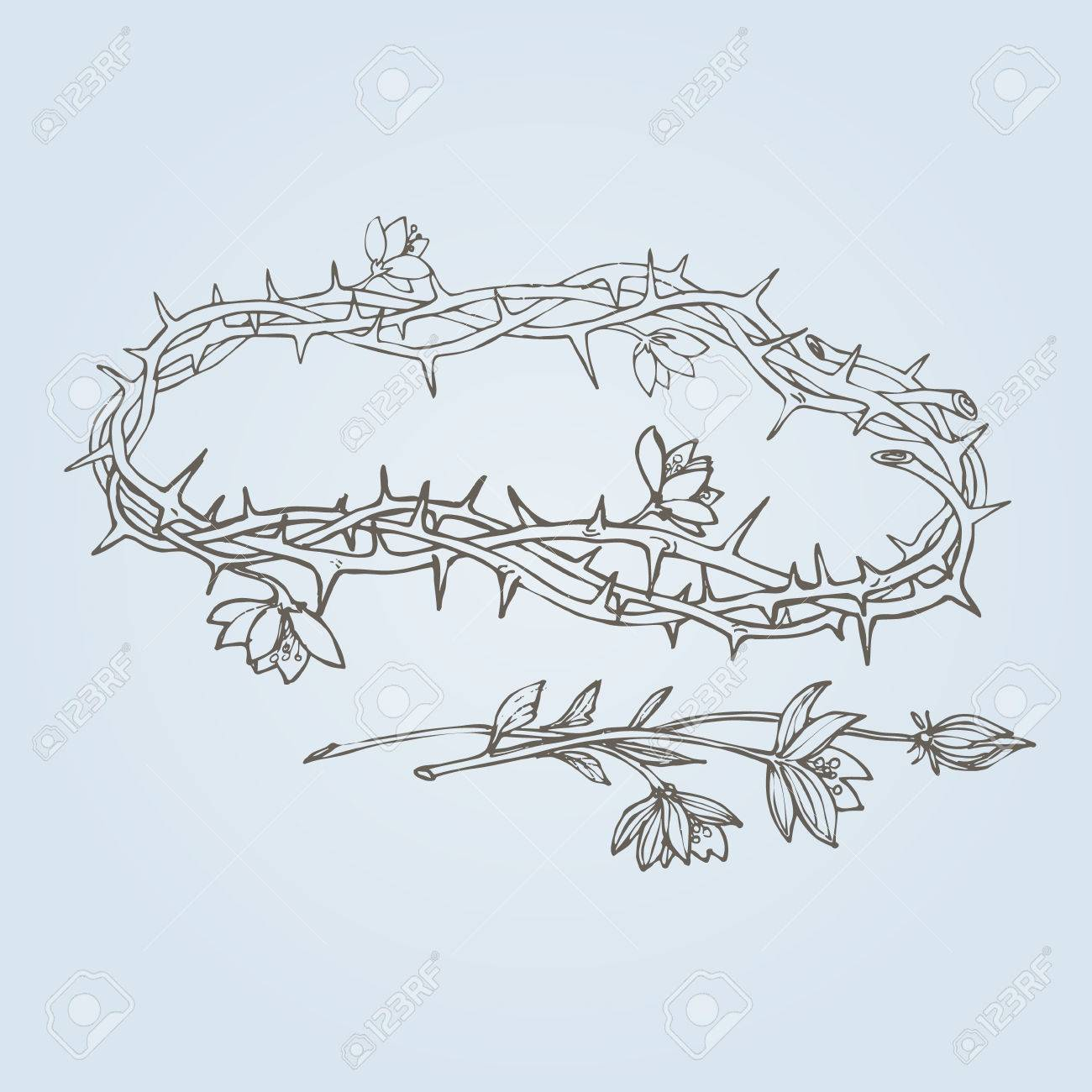 Flowering crown of thorns a symbol of hope resurrection and flowering crown of thorns a symbol of hope resurrection and renewal eps buycottarizona Image collections