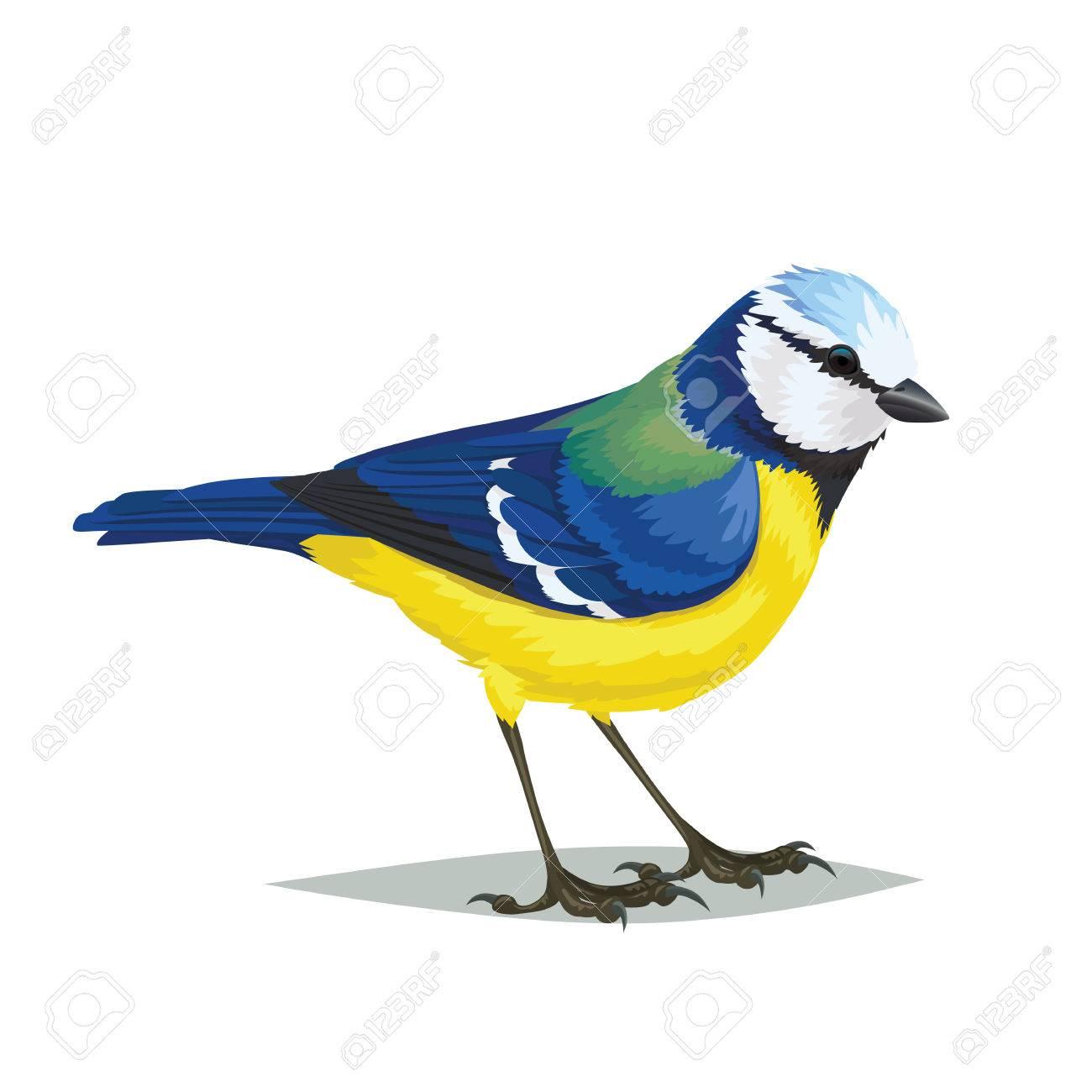 Realistic Bird Eurasian Blue Tit Isolated On A White Background ...