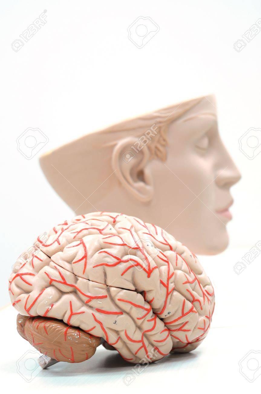 Nett Saladin Anatomie Und Physiologie 5. Ausgabe Pdf Fotos ...