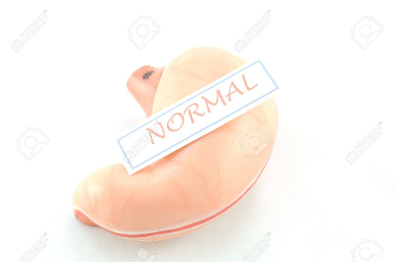 stomach of human Stock Photo - 17764589