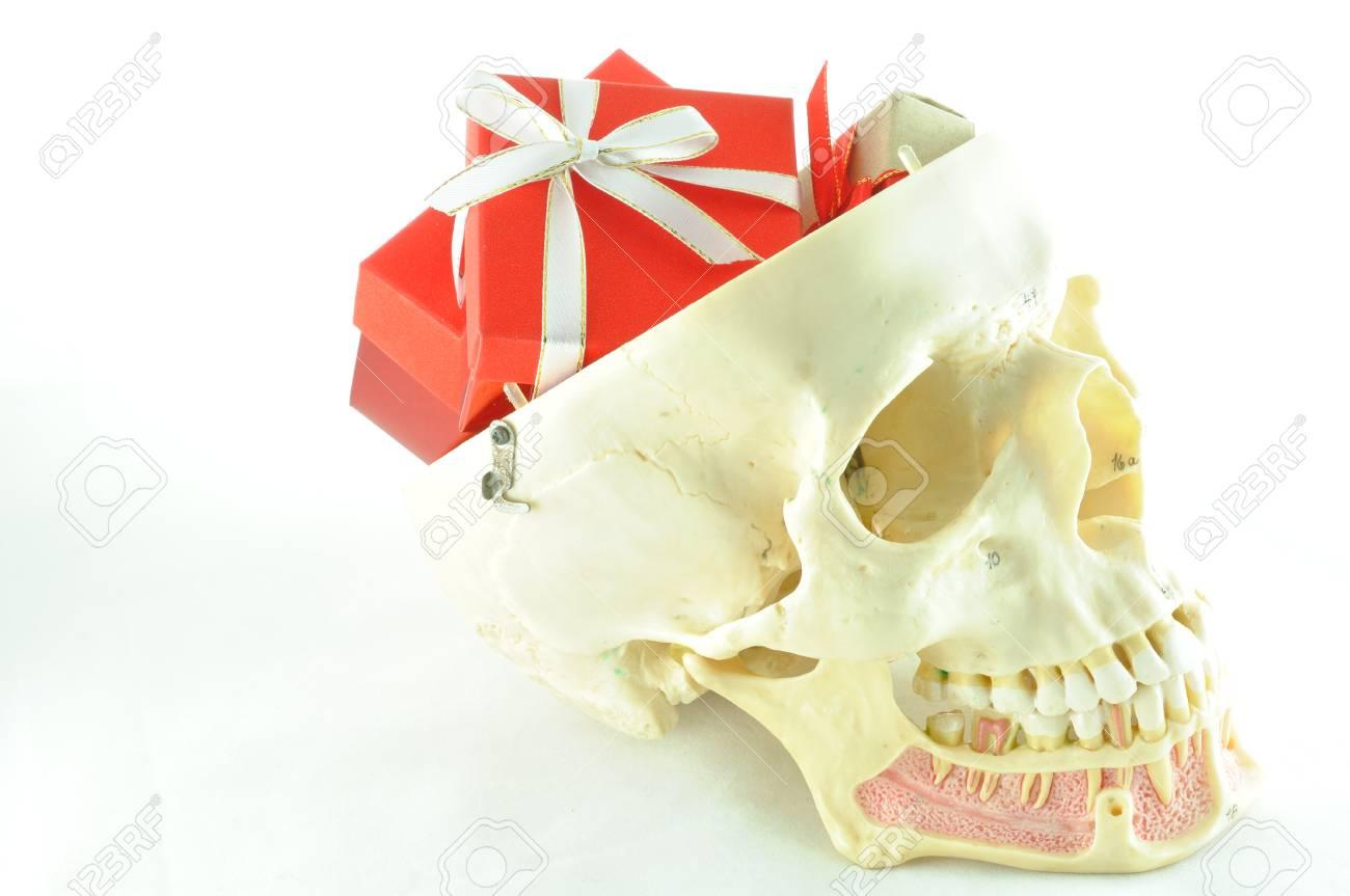 Menschlichen Schädel Anatomie Modell Lizenzfreie Fotos, Bilder Und ...