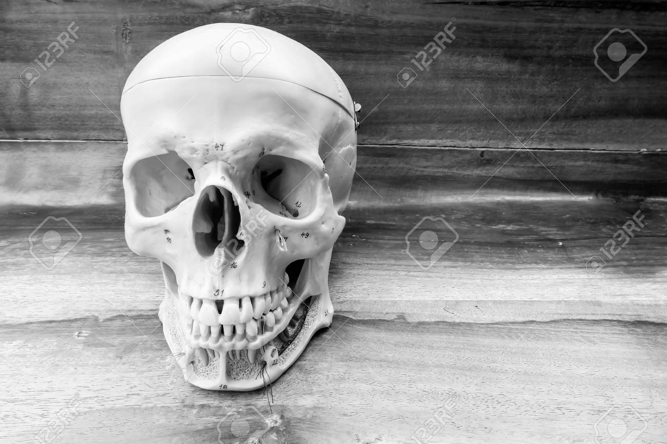 68ead91225 human skull with black and white color concept Stock Photo - 68864421