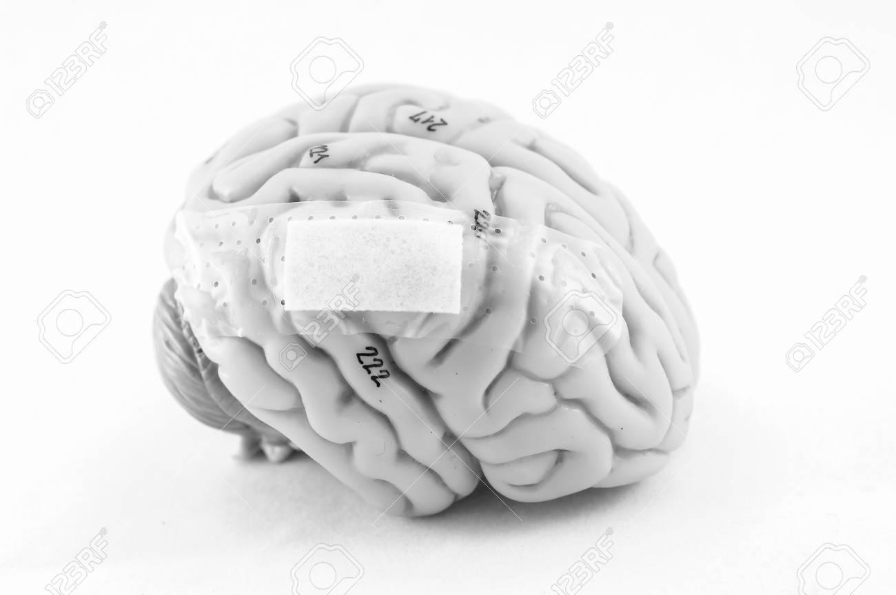 Gemütlich Bild Von Der Anatomie Des Gehirns Fotos - Anatomie Ideen ...
