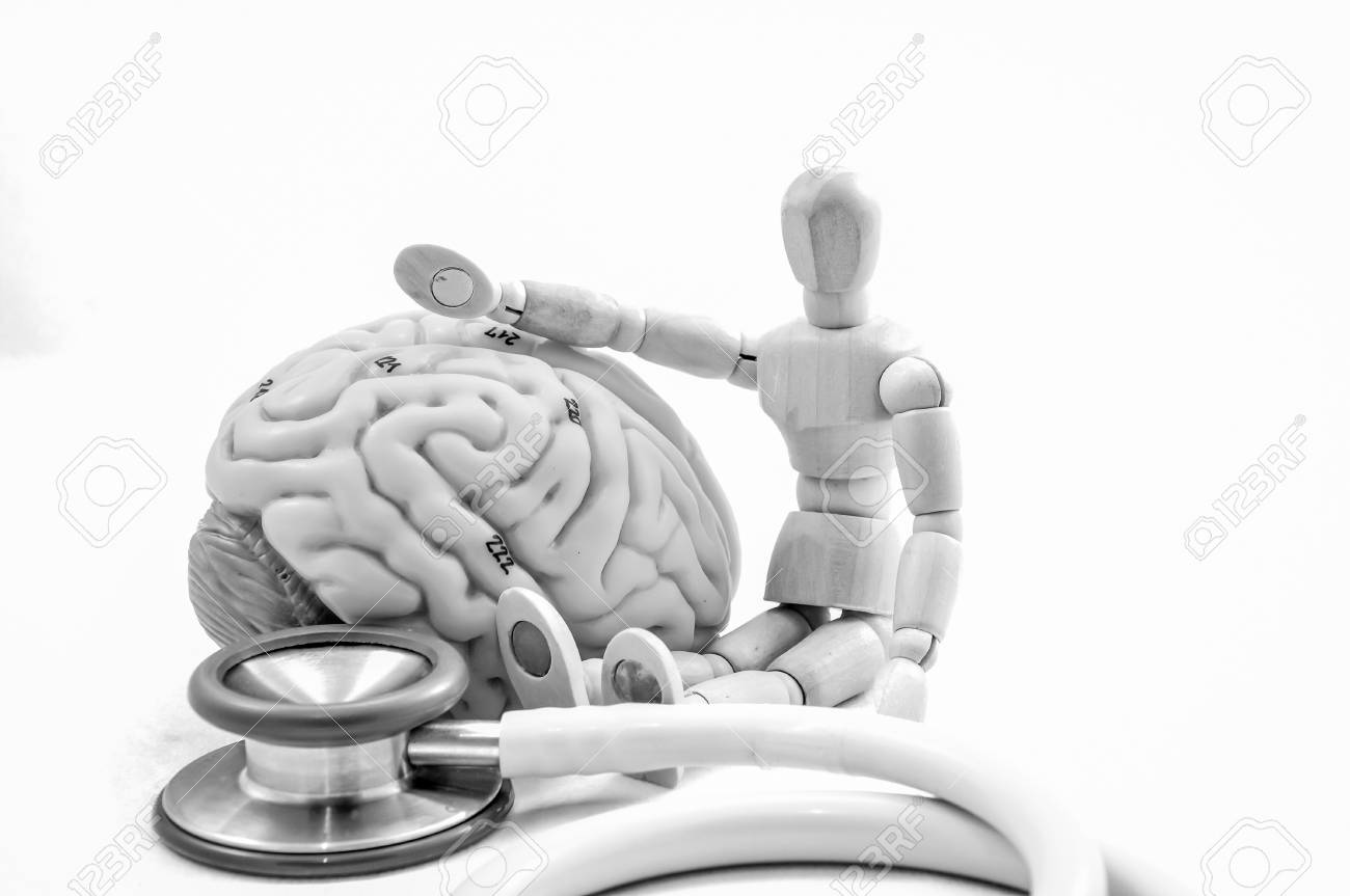 Anatomy Of Human Brain Model With Black And White Color Stock Photo ...