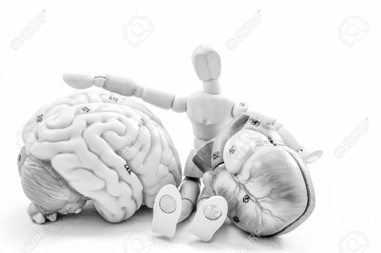 Gehirn Und Herz Der Menschlichen Anatomie Modell Mit Schwarzer Und ...