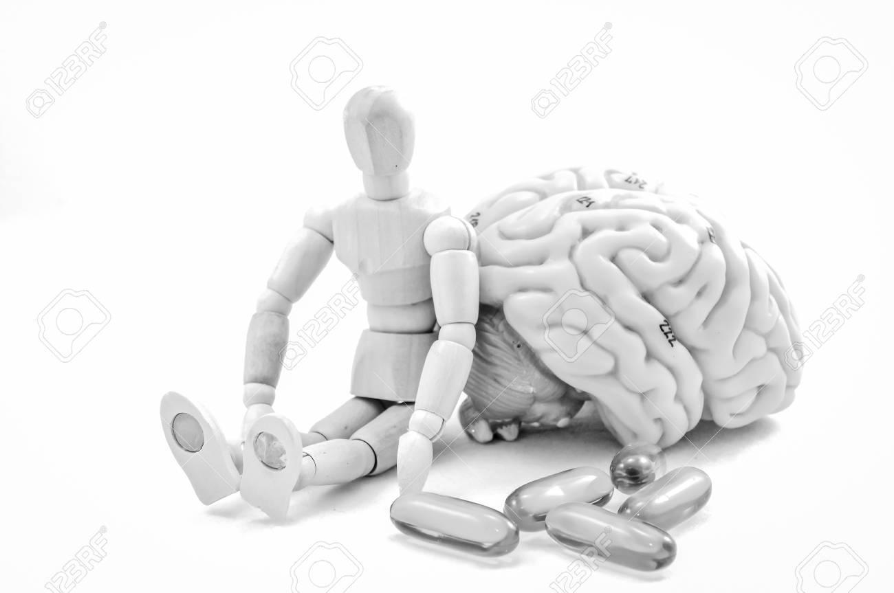 Anatomía Del Cerebro Humano Modelo Con Color Blanco Y Negro Fotos ...