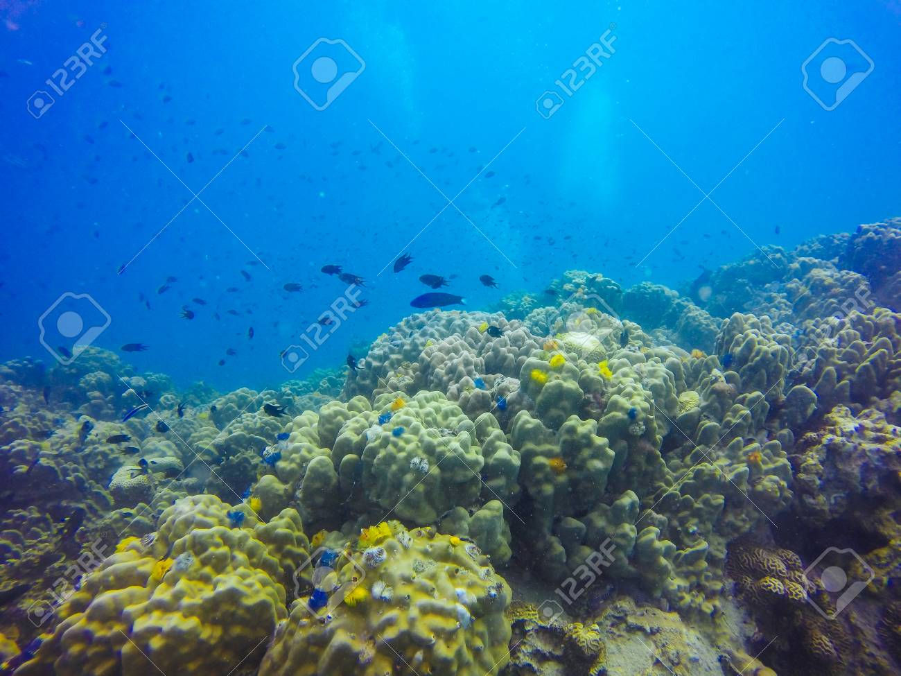 Young Coral Reef Formation On Sandy Sea Bottom Deep Blue Sea