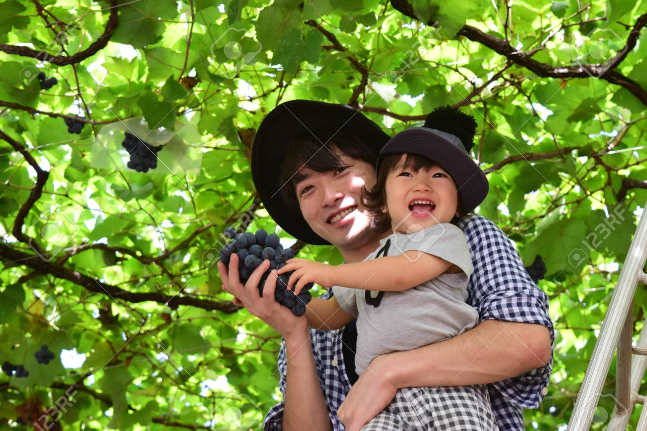 father and his son is picking grape - 76839344