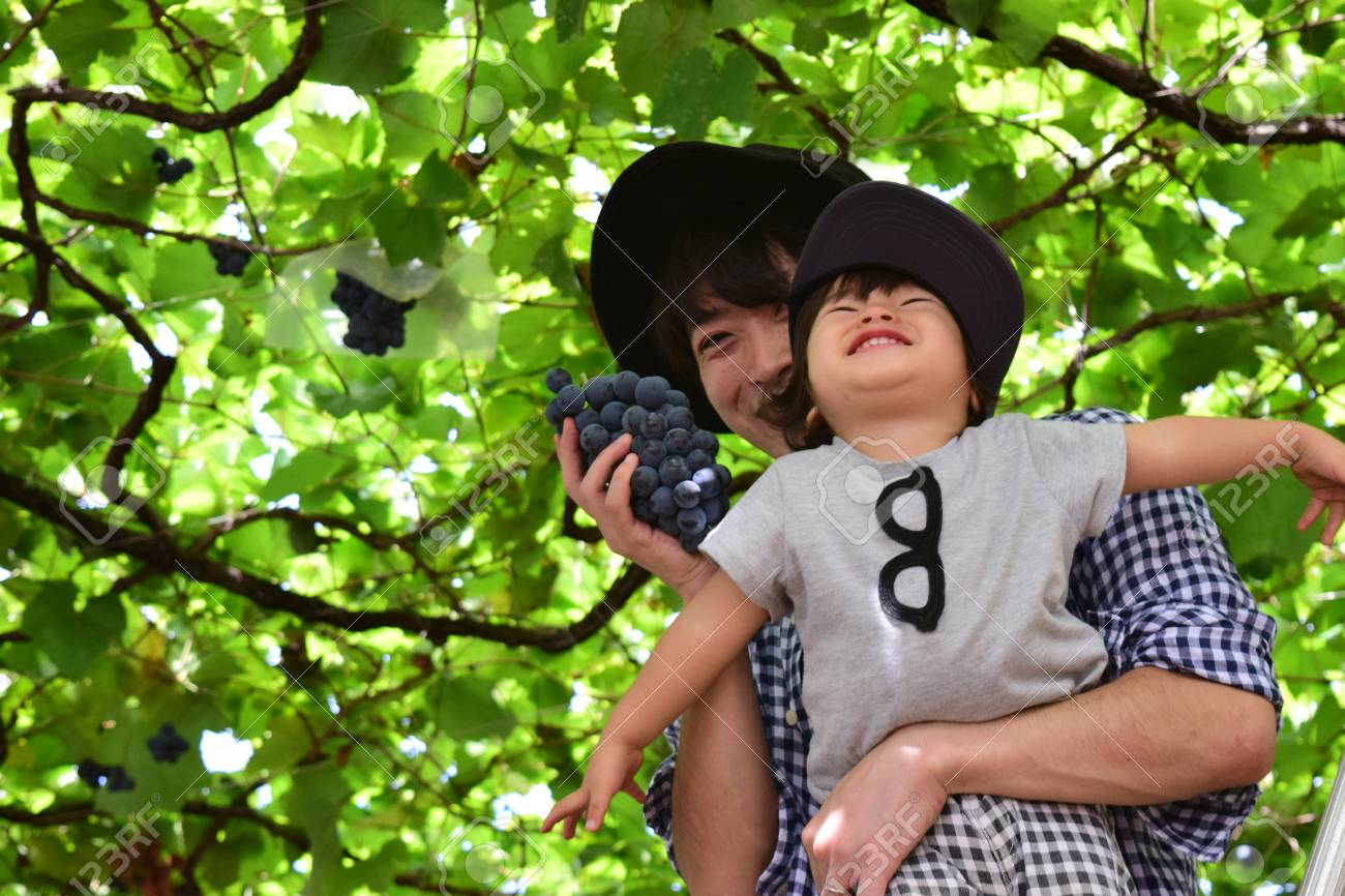 father and his son is picking grape - 76839350