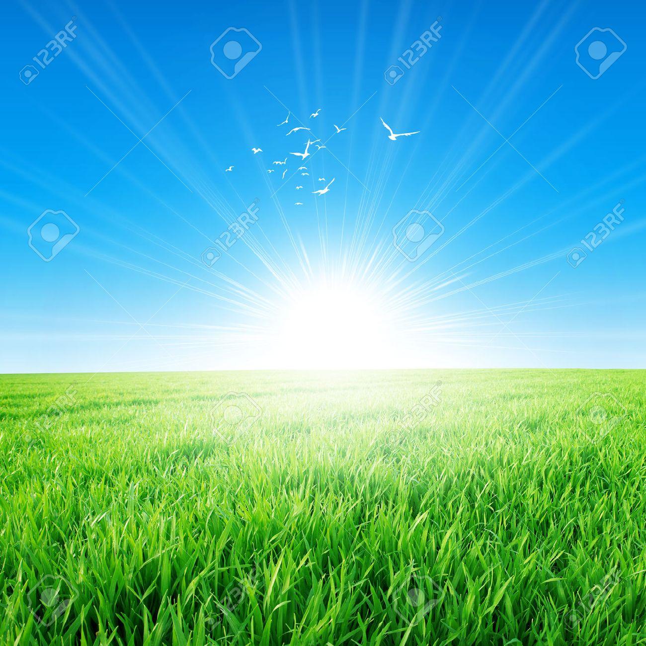 b43446b9e Campo de primavera bajo el sol de la mañana. Campo fresco de la hierba verde