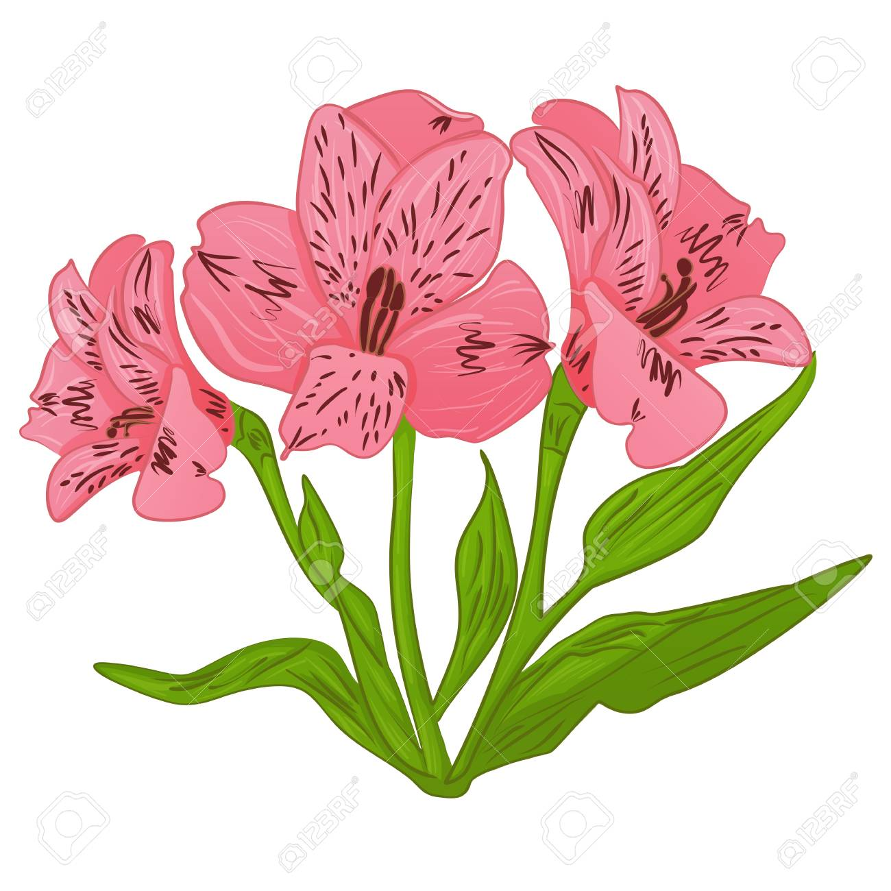 Cartoon flower alstroemeria and green leaves vector on a white cartoon flower alstroemeria and green leaves vector on a white background stock vector 64551855 izmirmasajfo