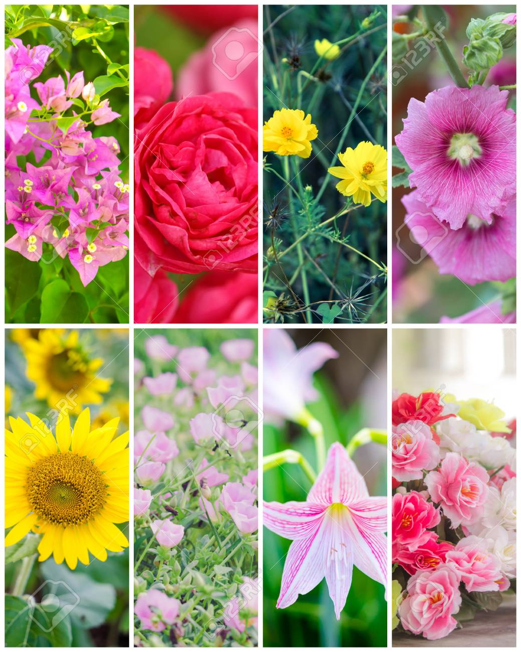 Collage picture of different beautiful flowers stock photo picture collage picture of different beautiful flowers stock photo 70052830 izmirmasajfo