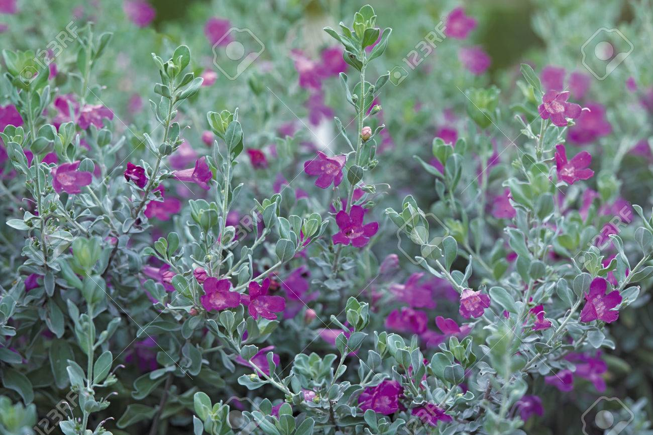 Little Pink Flowers On An Emerald Bush In The Sun Stock Photo