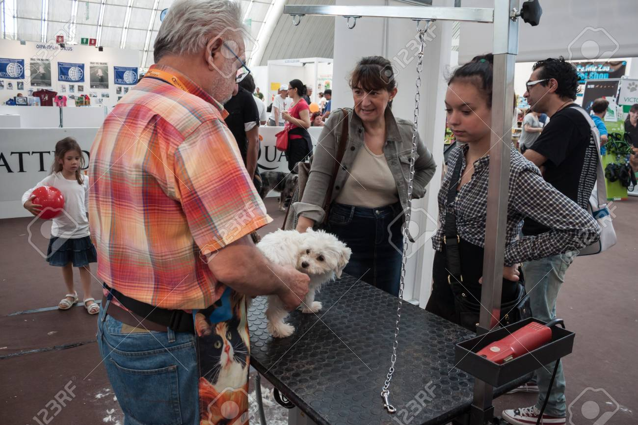 MILAN, ITALY - JUNE 8: People and dogs visit Quattrozampe in fiera exhibition, important event dedicated to dogs and their owners in Milan on JUNE 8, 2013. Stock Photo - 20188757