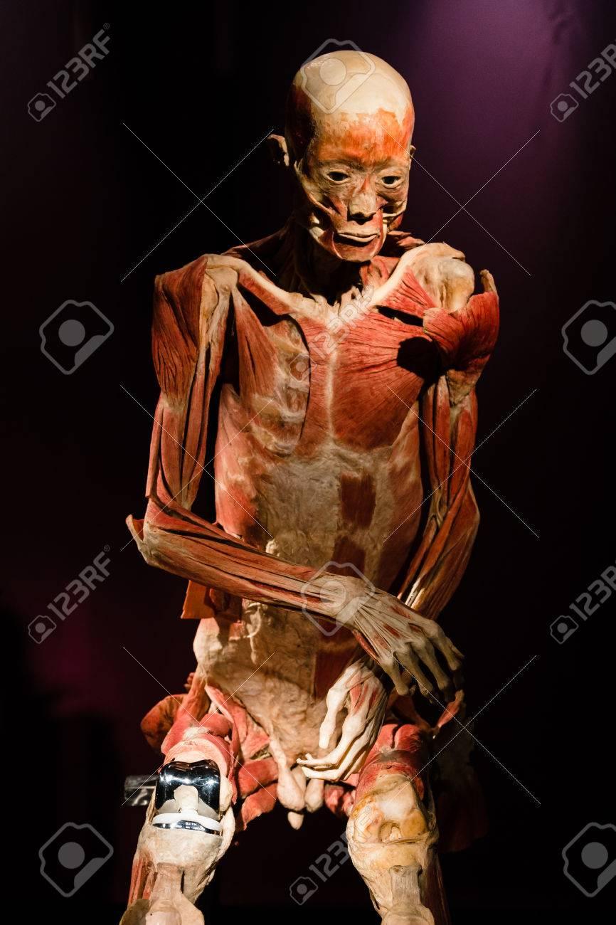 MILAN, Italia - 30 De Septiembre 2016: Plastinado Cuerpo Humano En ...