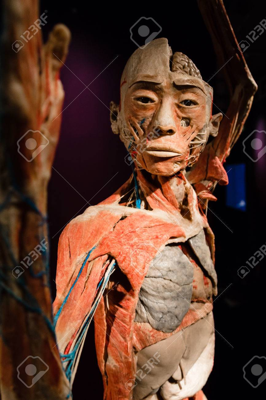 Milan Italy September 30 2016 Plastinated Human Body On Stock