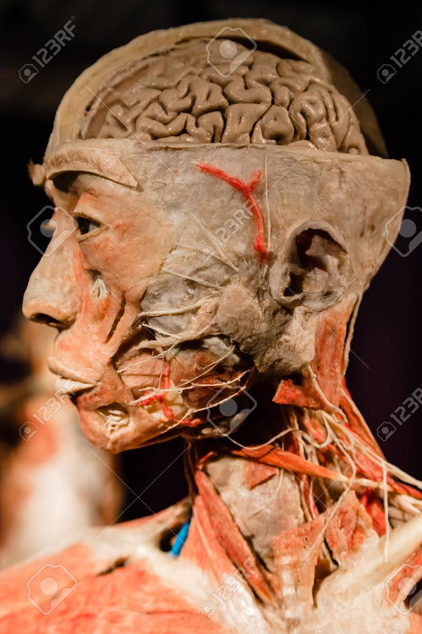 Mailand, Italien - 30. September 2016: Plastinated Ereignis ...