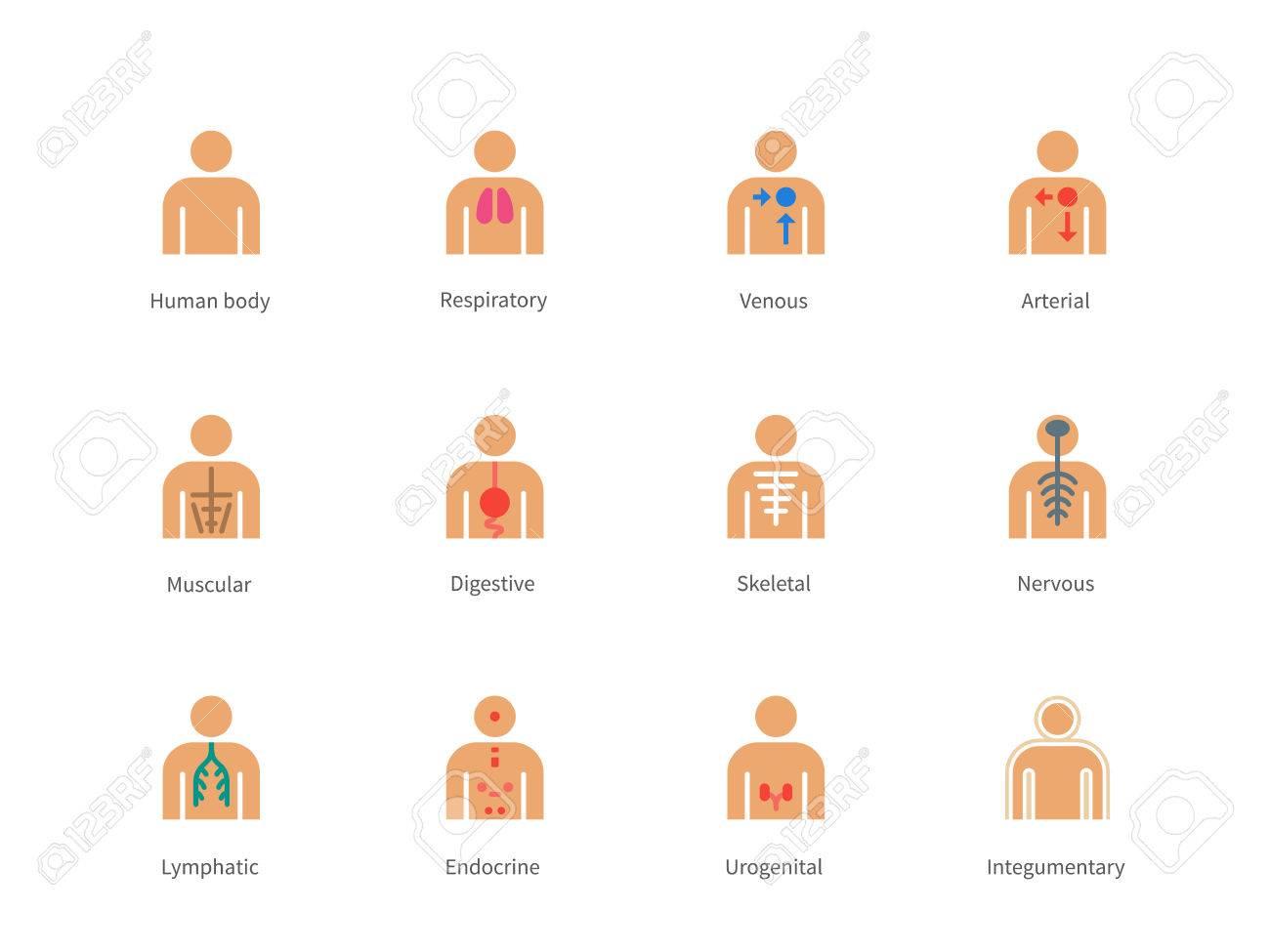 Piktogramm Sammlung Des Menschlichen Körpers Und Anatomie Mit Lymph ...