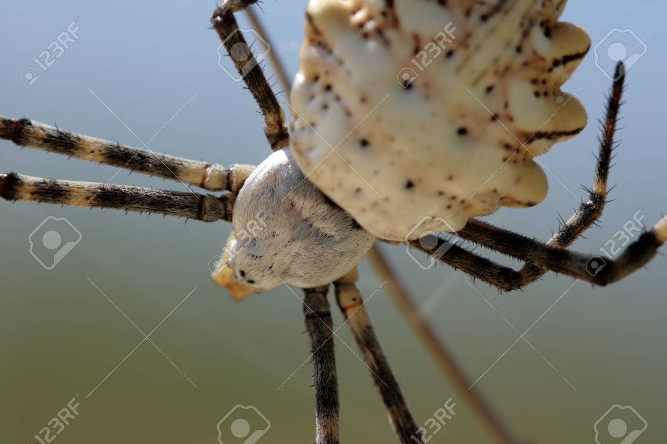 Spider close up hanging on a web Stock Photo - 16017554