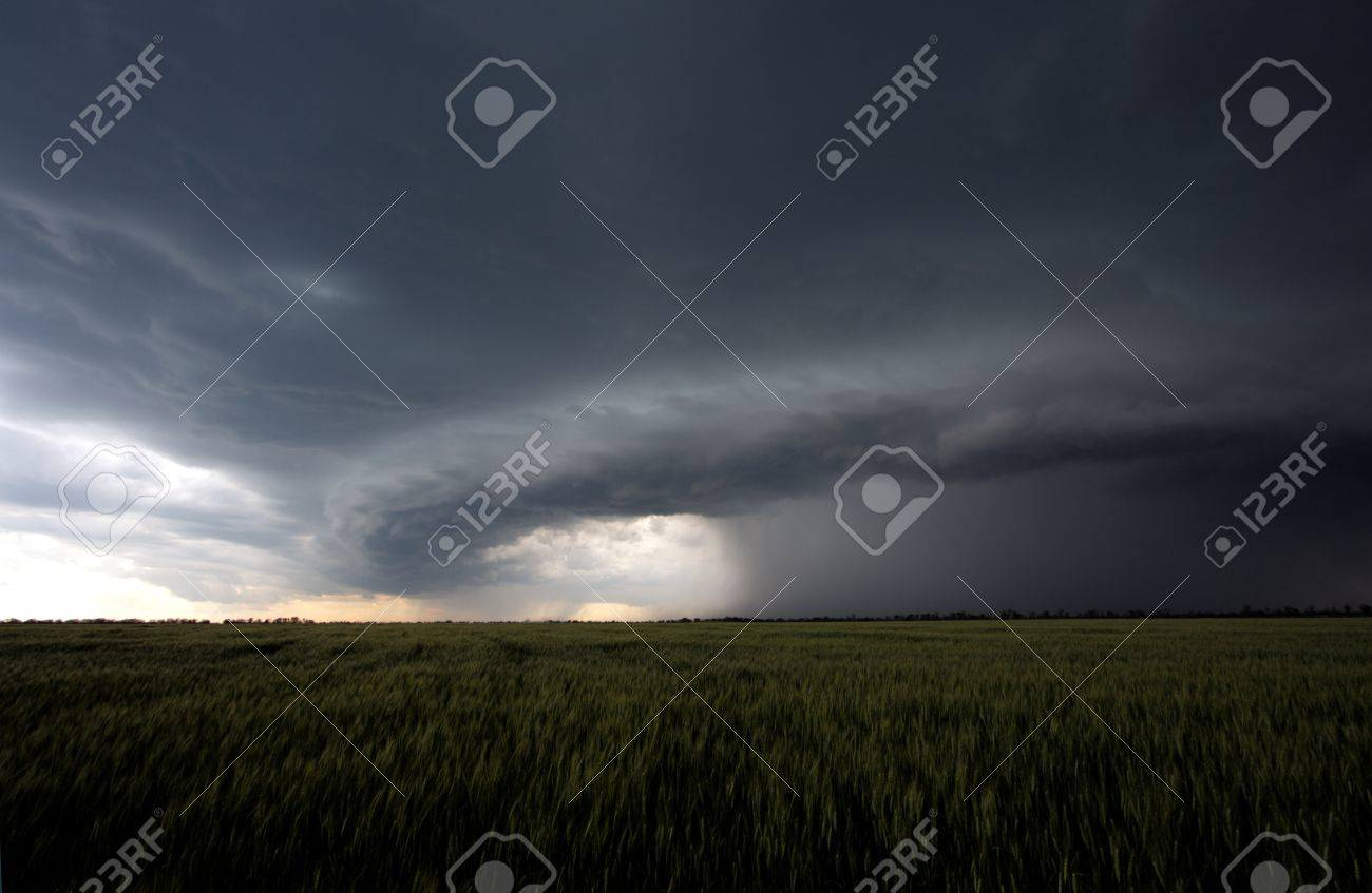 The beginning of summer hurricane over a green field Stock Photo - 16018755