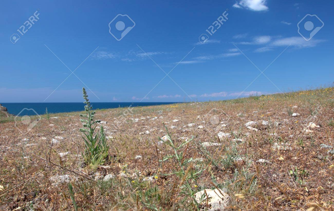 Wild steppe on cape Tarhankut in Crimea, Ukraine Stock Photo - 17231320