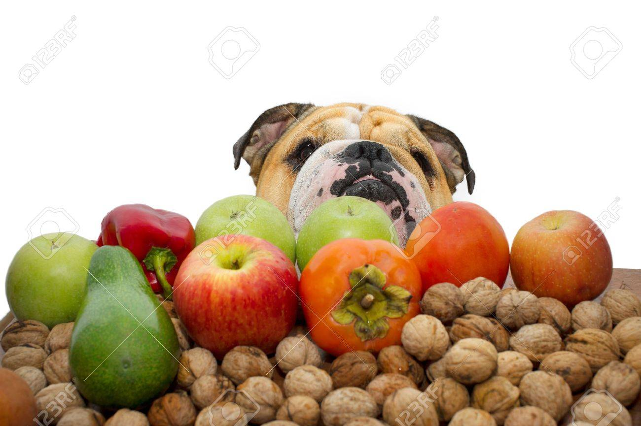 Autumn fruits nuts and vegetables with a bulldog the background isolated - 11066554