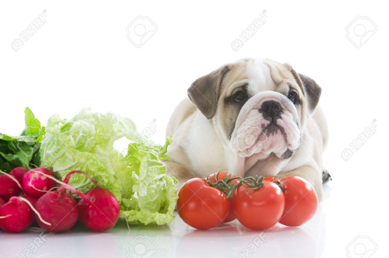 Beautiful english bulldog puppy with vegetables - 13324224