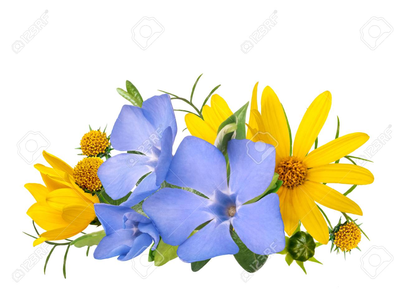 Yellow And Blue Wild Primrose Flowers Bouquet Isolated On White