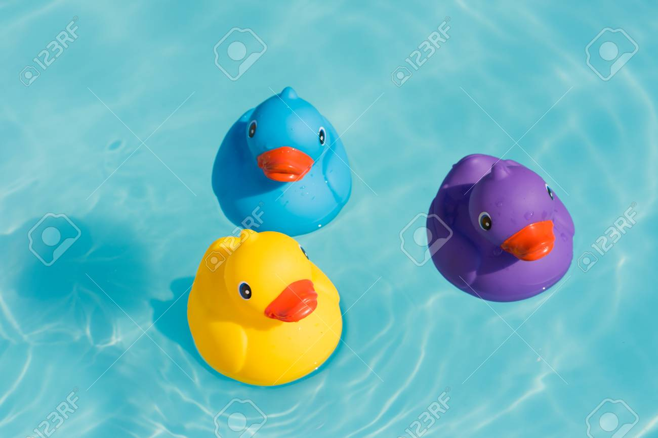 Three Colorful Rubber Ducks, Yellow, Blue And Purple, Swimming ...