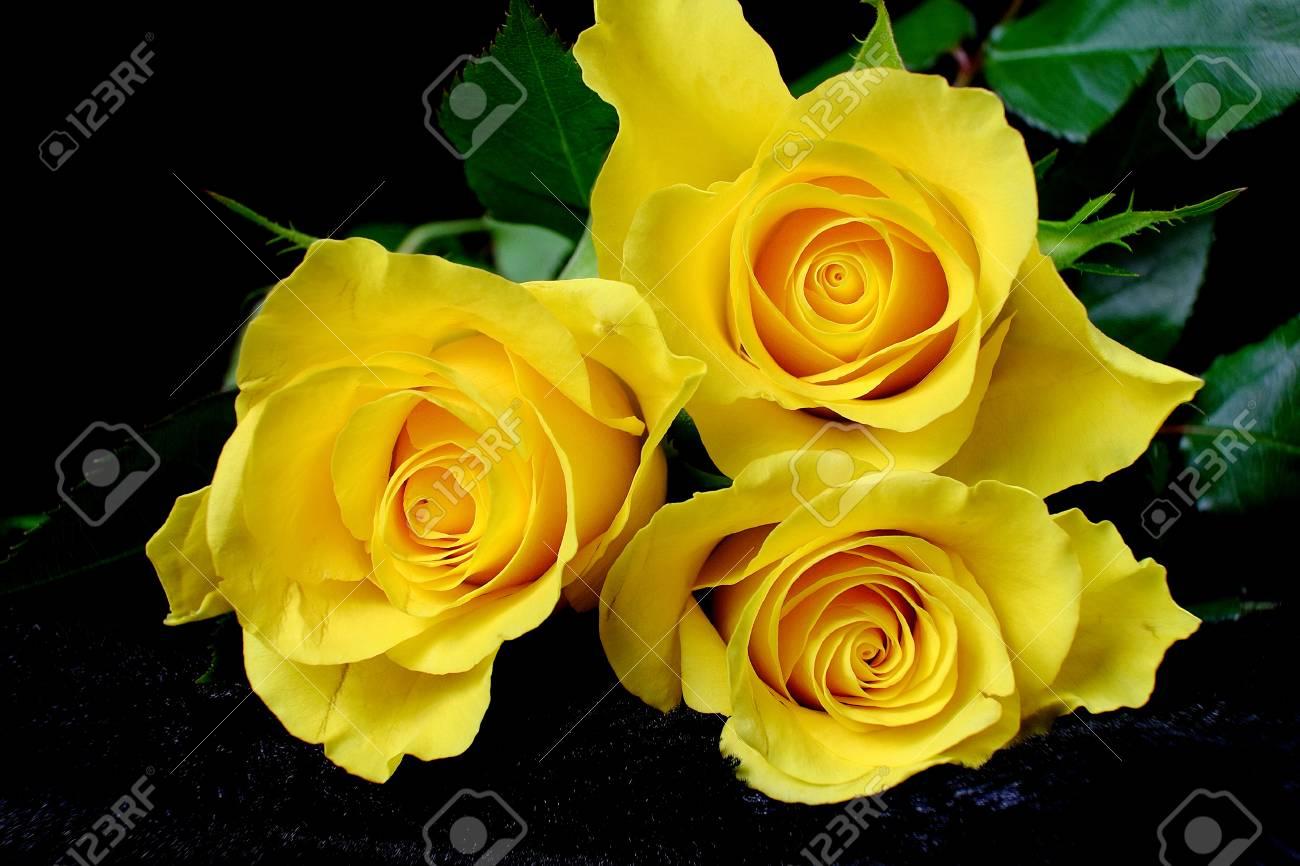Three Yellow Roses On Black Velvet Flowers Background Still