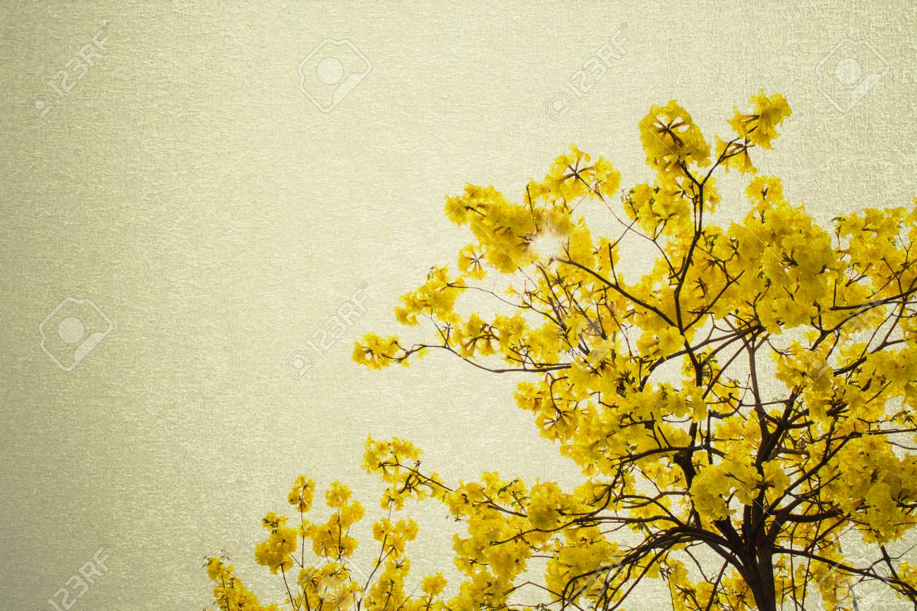 Big Branch Plant With Round Fluffy Yellow Flowers Stock Photo