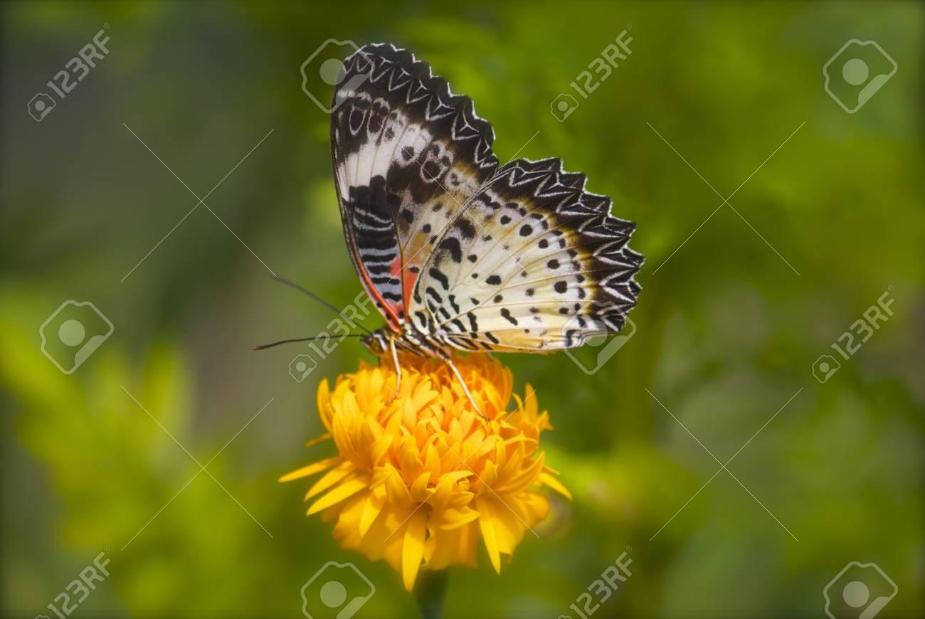 Schmetterling Futterung Auf Sonnenblume Lizenzfreie Fotos Bilder