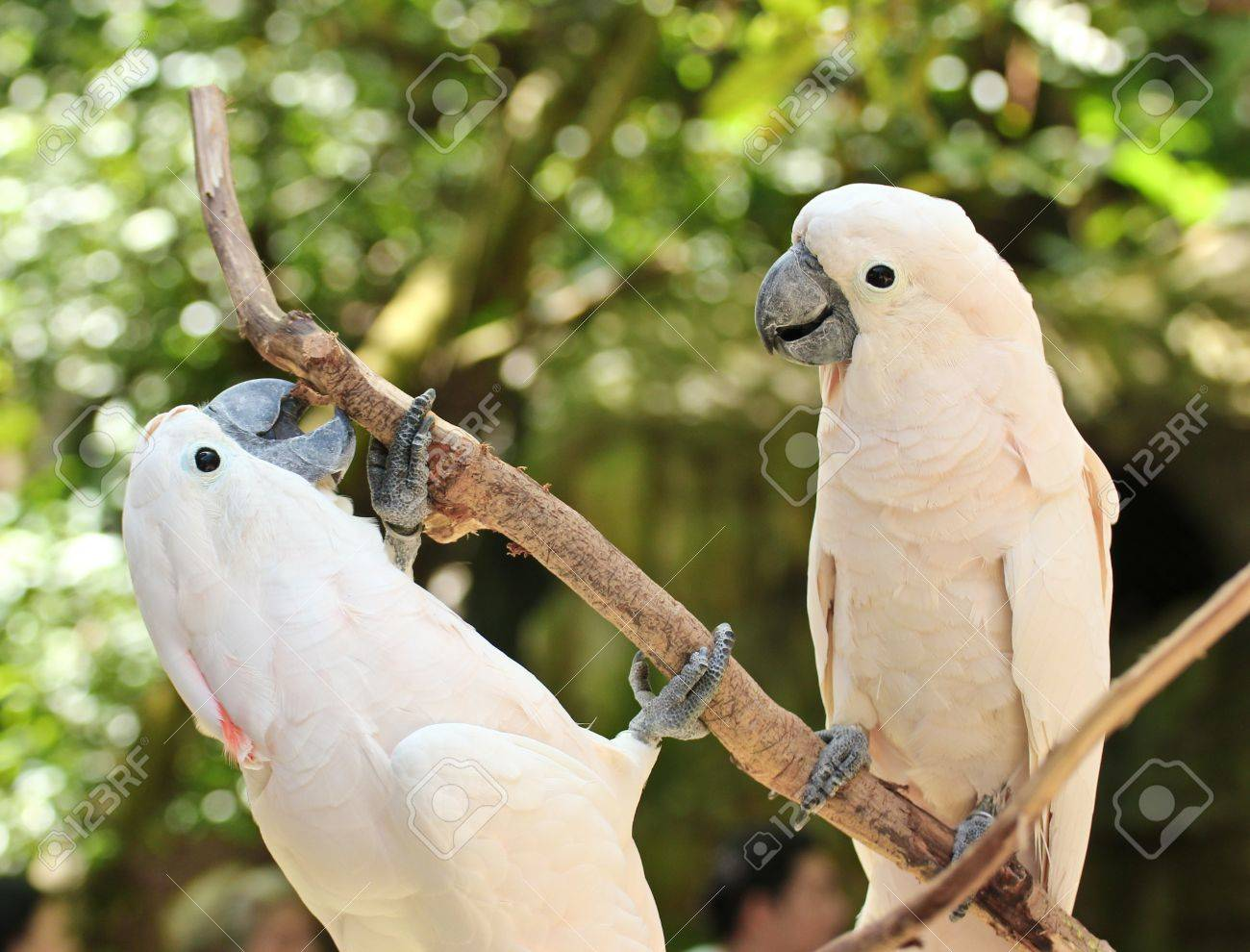 converse parrot