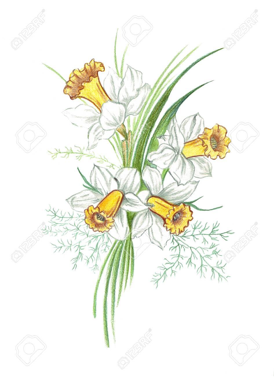 ORIGINAL colored pencil illustration Wild Flowers No.17