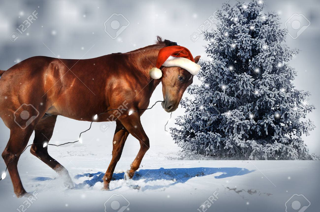 Christmas Horse Stock Photo Picture And Royalty Free Image Image 55257392