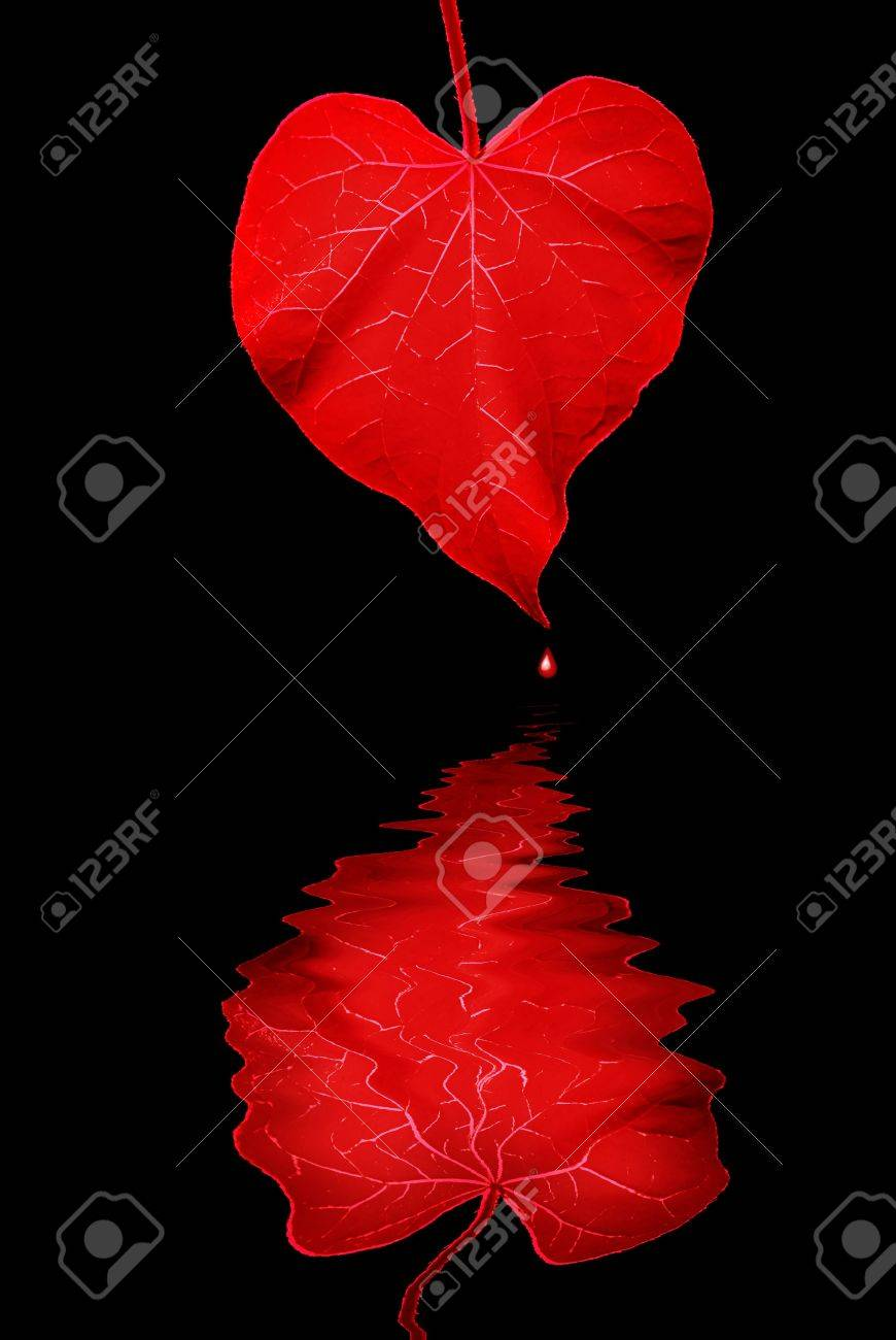 De Color Rojo Profundo Con Forma De Corazón Por La Mañana La Hoja De ...