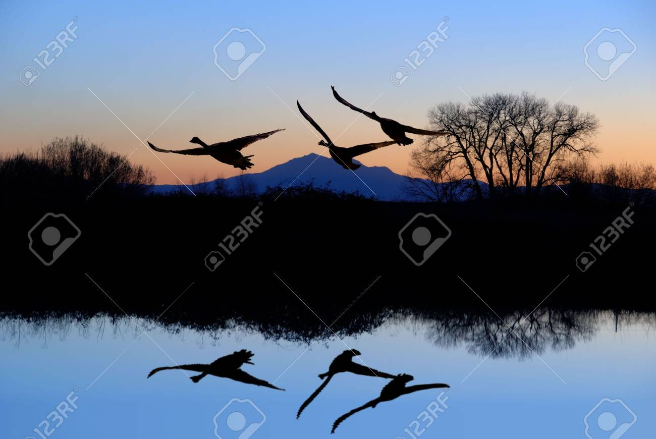 Reflected Riparian Tree and Canadian Geese in Evening Blue Stock Photo - 2601769