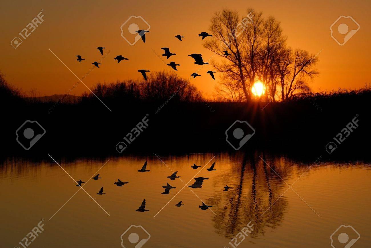 Reflection of Winter Evening Duck Flying over Wildlife Pond, San Jaoquin Delta, California Flyway Stock Photo - 10255770