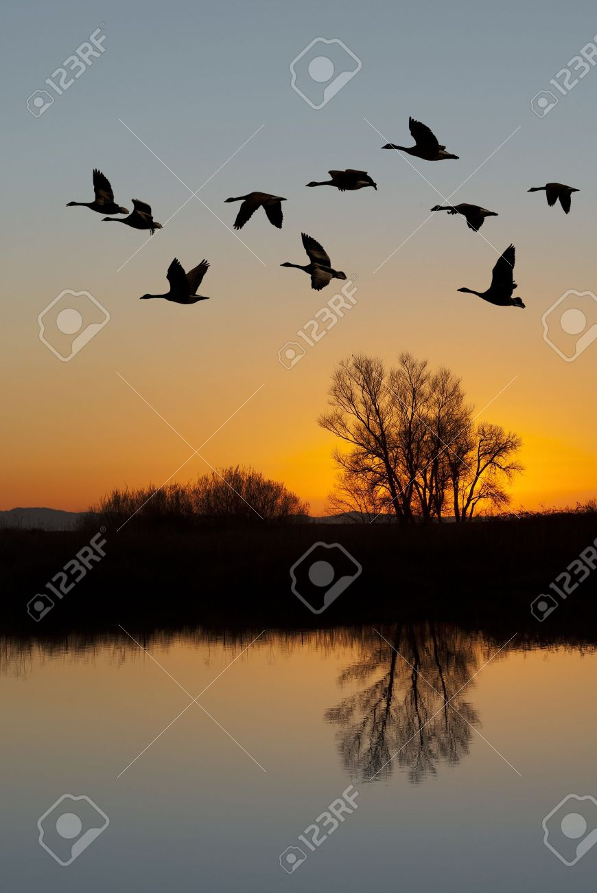 Silhouetted Canadian Geese flying at sundown over quiet Winter pond on wildlife refuge, San Joaquin Valley, California Stock Photo - 14629219