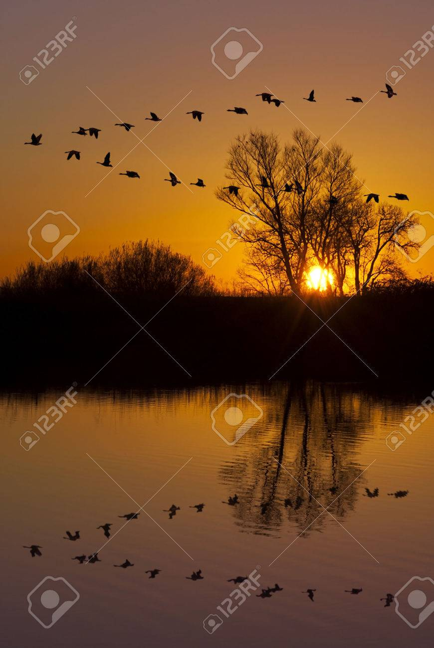 Reflection of Canadian geese flying over wildlife refuge on an orange sunset, San Joaquin Valley, California Stock Photo - 26281510