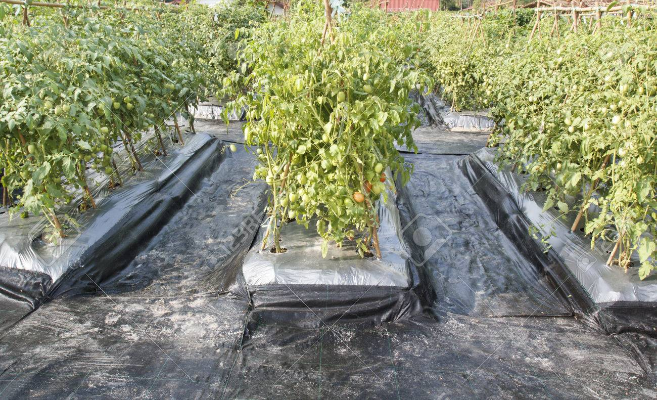 weed cover for garden