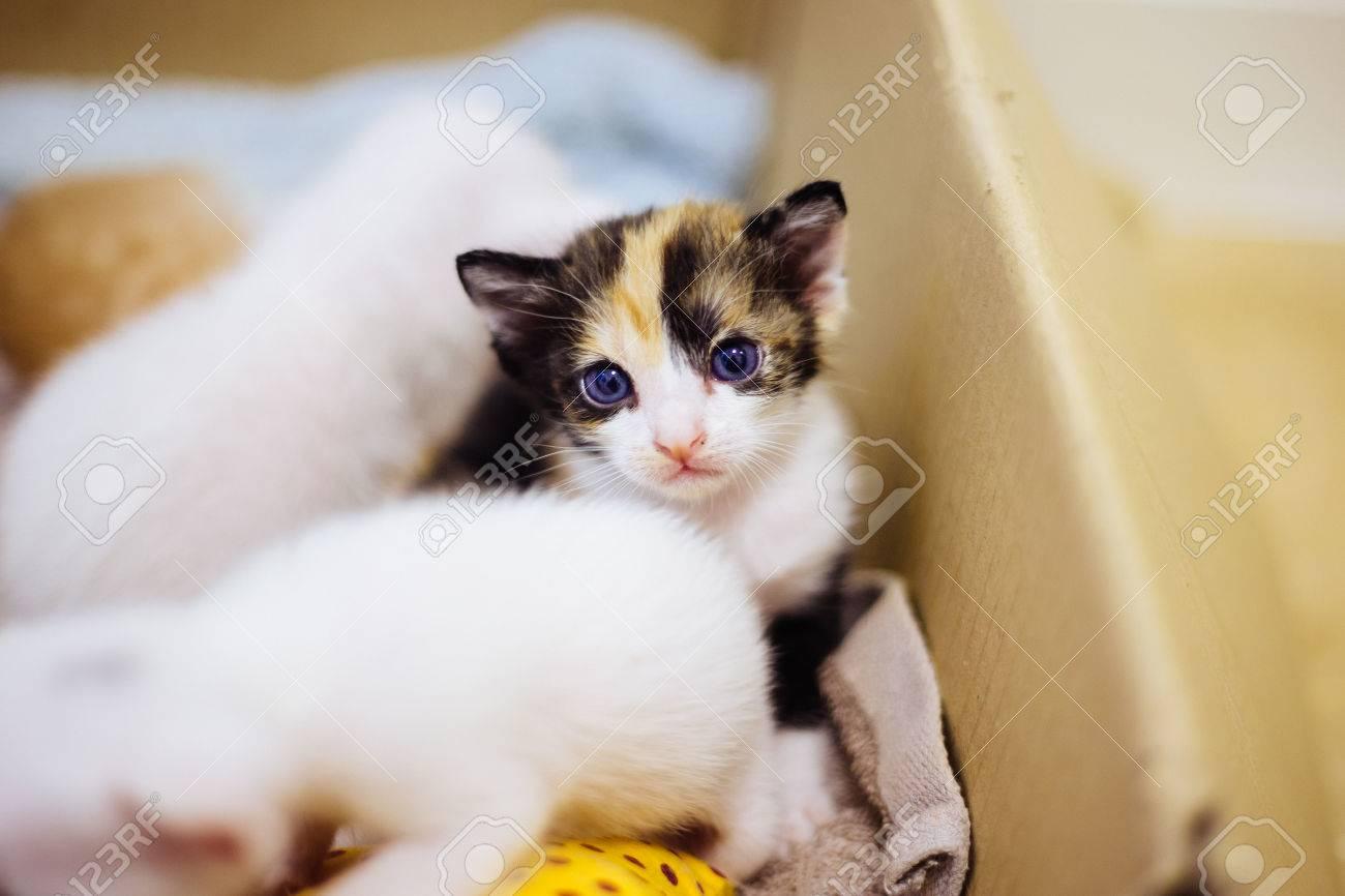Bebé Gato Tres Gatito De Color Fotos, Retratos, Imágenes Y ...